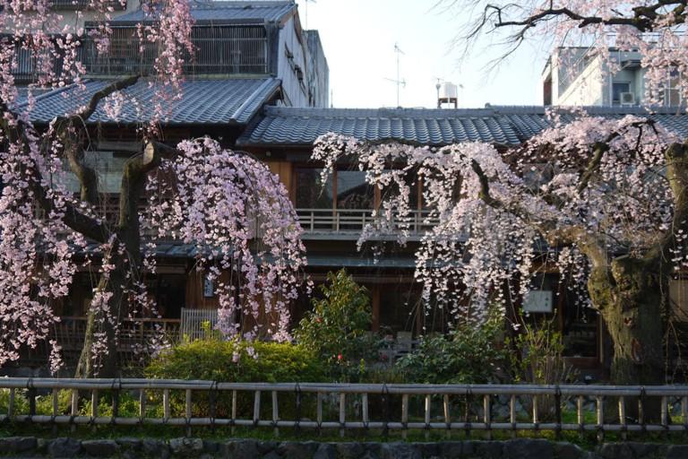 gionshirakawa1