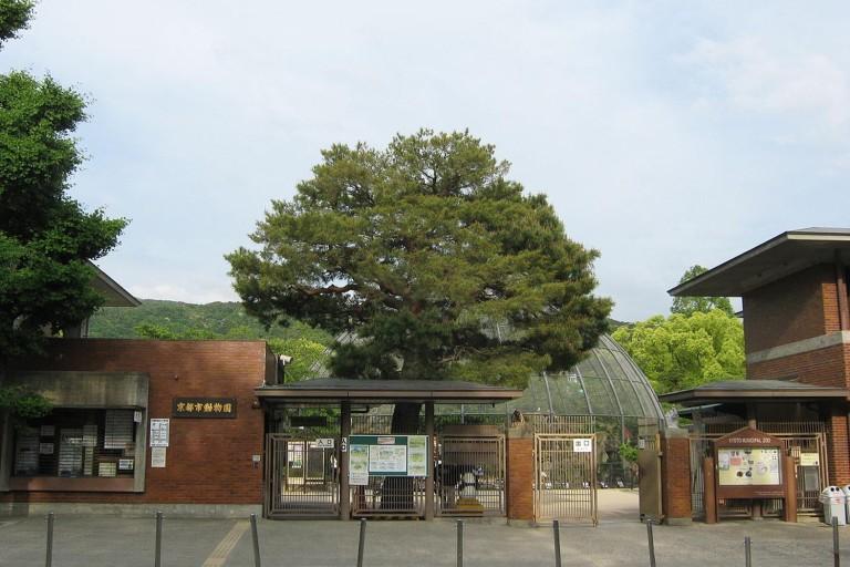 【京都】まさに数珠つなぎ!?左京区・京都市動物園のモルモットの行列が話題に!