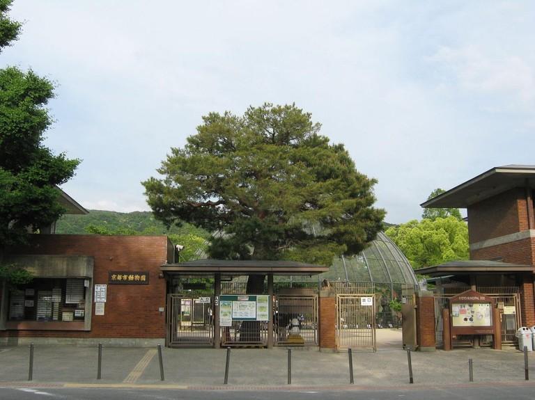 kyotoshizoo